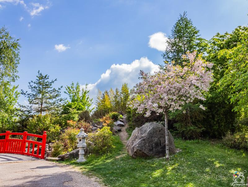 jardinjaponais - kyonyxphoto-serie-dijon-jardin-japonais-5.jpg
