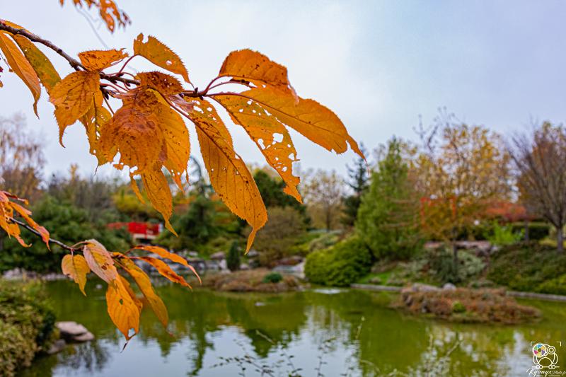jardinjaponais - kyonyxphoto-series-dijon-jardin-japonais-16